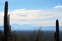 brown-mountain-tucson-7