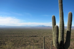 brown-mountain-tucson-8