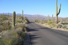 northwest-side-tucson-arizona-trails-7