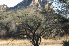 dragoons-to-west-cochise-stronghold-trails-tucson-arizona-3