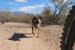 Fantasy Island - Tucson, Arizona (9)