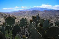 la-milagrosa-trails-tucson-arizona-5