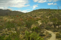 La Milagrosa Trails - Tucson, Arizona (3D)