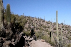 Tucson Mountain Park (4)