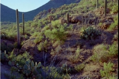 Tucson Mountain Park (6)
