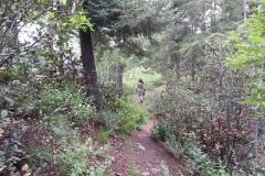 mt-lemmon-u2013-green-mountain-16