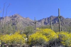 mt-lemmon-u2013-meadowaspen-draw-11