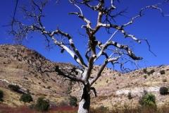 mt-lemmon-u2013-molino-basin-to-italian-trap-tucson-arizona-3