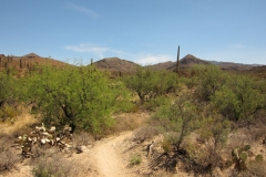 pistol-hill-to-three-bridges-trails-tucson-arizona-10