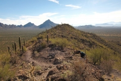 Starr Pass Tucson (13)