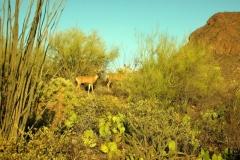 Starr Pass Tucson (4)