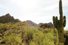 Starr Pass Tucson (7)