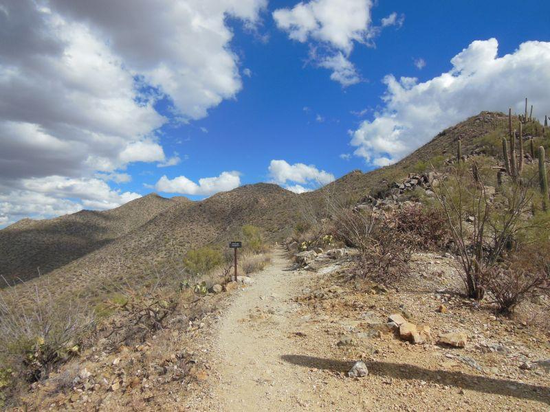Mountain Biking Trails in Tucson Arizona