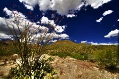West Desert Trails - Tucson, Arizona (5)
