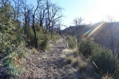willow-springs-u2013old-pueblo-trail-1