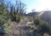 Willow Springs – Old Pueblo Trails (2B)
