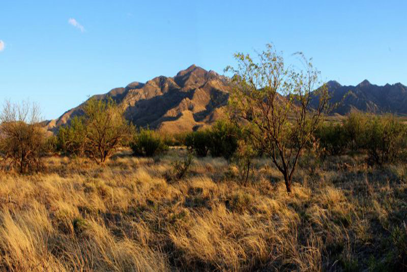 Elephan-Head-Trails-Tucson-Arizona-featured