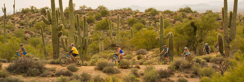 Tucson Bike Rentals Honey Bee Mountain Bike Tours